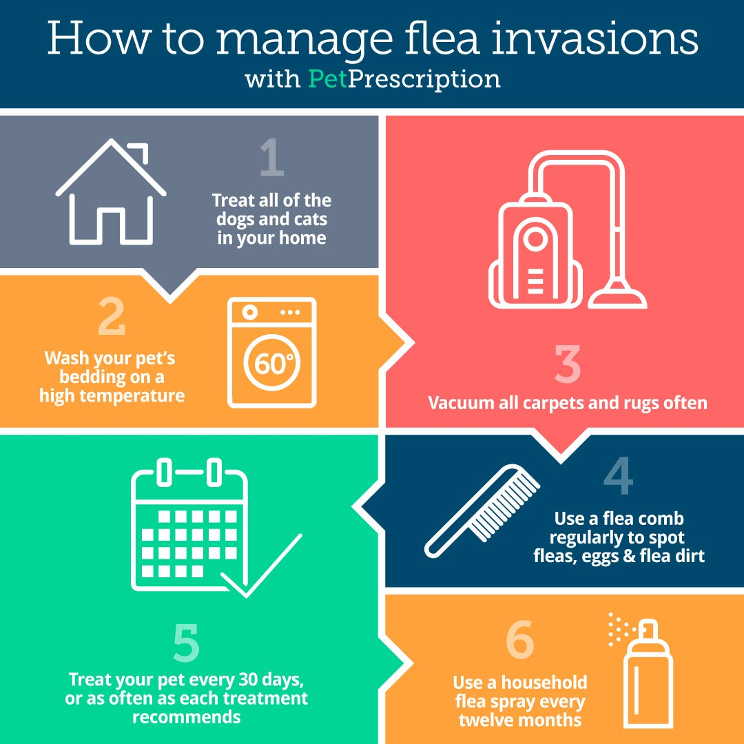 How to manage a flea infestation
